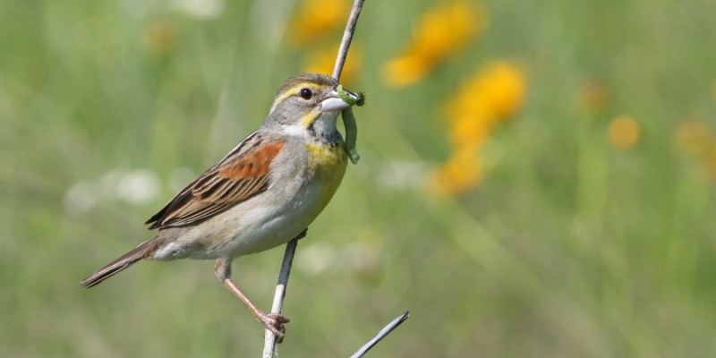 How to Certify Your Yard as a Wildlife Habitat
